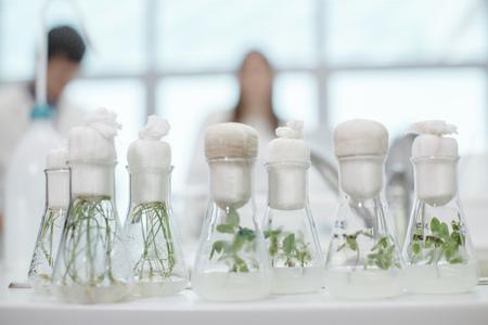 test tube holder: Laboratory, Plants in test tubes LANG_EVOIMAGES