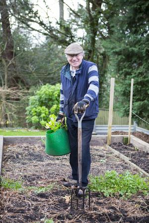 pitchfork: Senior man working in vegetable garden, Bournemouth, County Dorset, UK, Europe