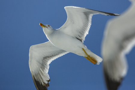 move in: Seagulls flying against blue sky