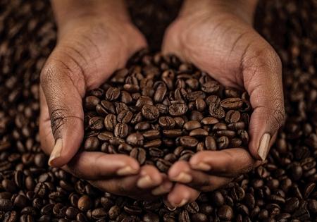 semilla de cafe: Manos de la mujer africana que sostiene los granos de café.