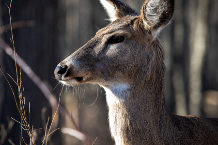 Fauna Mammals Deer Head Closeup Stock Photo
