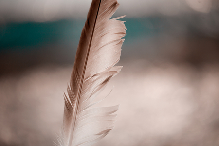 Bird Feather Standing Upright Blurred Background Bokeh Stock Photo