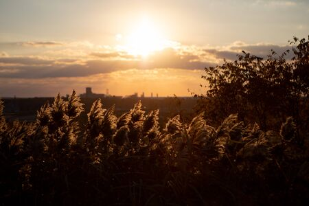 Tall Grass in the Park backlit on a sunny autumn afternoon or evening. Stock Photo