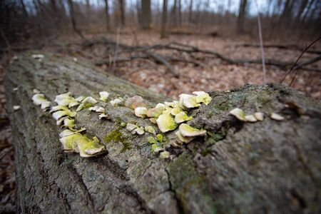 Forest Fungus on a Fallen Tree Trunk in a local conservation area