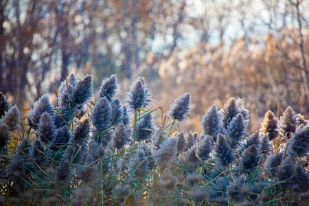 Wispy Grasses Rise and Grow in Forest of Autumn Colours in a public park