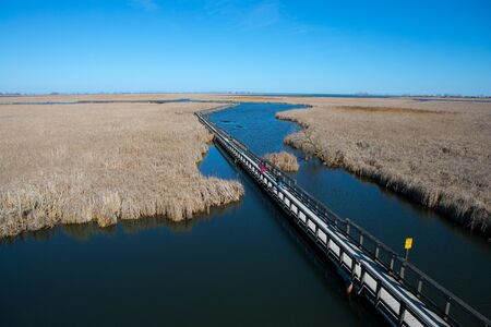 Environmental high view of Point Pelee National Park Marsh Boardwalk in the spring
