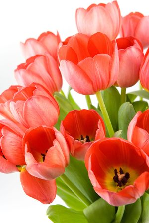 arranged: Red tulips over white background Stock Photo