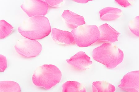 Rose petals on white backgruond