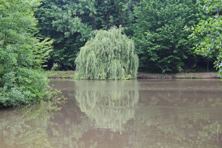 overhanging: Reflection of the overhanging willows on the pond Stock Photo
