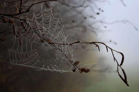 spider web Stock Photo - 4314260