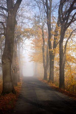 road autumnal: autumnal road