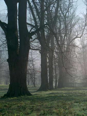 Trees on the Hukvaldy