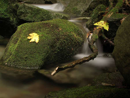 Water and leaf