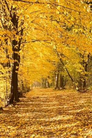 autumn avenue with fallen leaves Stock Photo