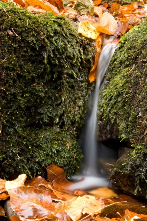 Natural still life with a small waterfall photo
