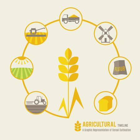 Agricultural timeline (a graphic representation of cereal cultivation). Minimalistic (flat) design. Soft and warm colors (light green, yellow and brown).