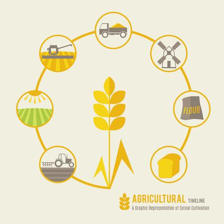 cosecha de trigo: Línea de tiempo Agrícola (una representación gráfica de cultivo de cereales). Diseño minimalista (plana). Los colores suaves y cálidos (verde claro, amarillo y marrón). Vectores