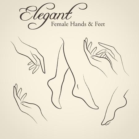manos y pies: Conjunto de siluetas elegantes en un estilo de dibujo lineal (hembra manos y pies). Los elementos de diseño para la industria de cuidado de la piel