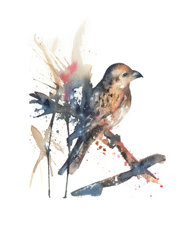American nutcracker watercolor illustration. Hand drawn bird sitting on a branch. Isolated on white Stock Photo
