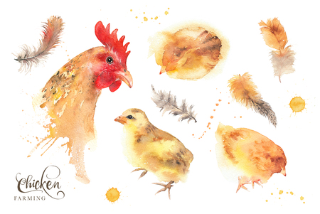 Isolated watercolor hen, chicken and feathers illustration set. Mother and baby concept. Mothers Day. Trendy loose watercolor image isolated on white.
