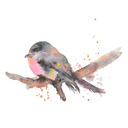Stylized bullfinch watercolor illustration. Hand drawn bird sitting on a branch. Isolated on white