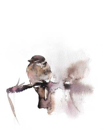 Winter sparrow loose watercolor illustration. Hand drawn bird sitting on a branch. Isolated on white Stock Photo