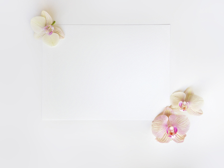 Flat lay composition with orchid flowers and blank paper sheet for text or artwork, white background. Light top view photo for business 写真素材