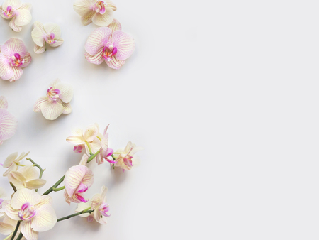 Composition à plat avec des fleurs d'orchidées et un espace pour le texte ou les illustrations, fond blanc. Photo vue de dessus légère pour les entreprises