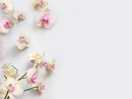 Flache Komposition mit Orchideenblüten und Platz für Text oder Kunstwerke, weißer Hintergrund. Leichtes Draufsichtfoto für Unternehmen