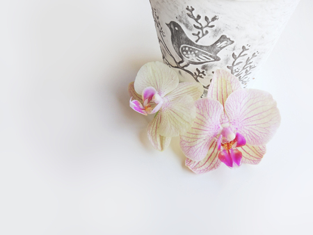 Flat lay composition with orchid flowers, flower pot, and space for text or artwork, white background. Light top view photo for business