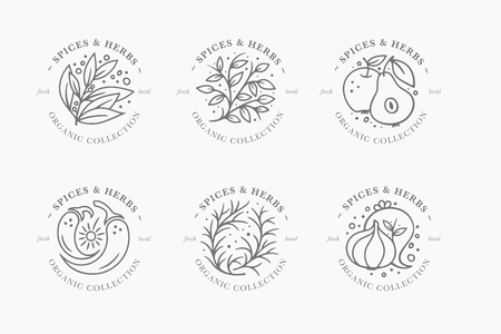 Spice and herb label collection. Black and white round badges templates. Fresh local organic collection