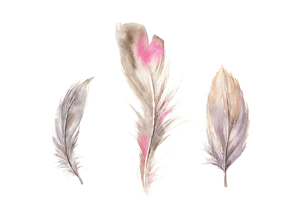 Hand drawn watercolor feather set. Boho style collection of the bird feathers. llustration isolated on white. Bird design for print, T-shirt, invitation, decoration