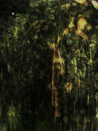 tremp�e: Pluie arbre tremp� dans un r�sum� d�luge Banque d'images
