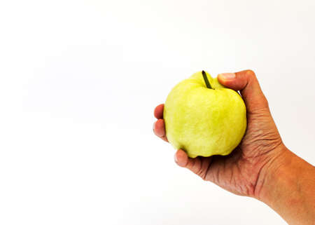 woman hand holding fresh guava fruits on white background
