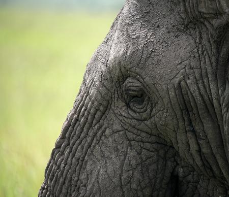 arrugas: Ojo del elefante y arrugas