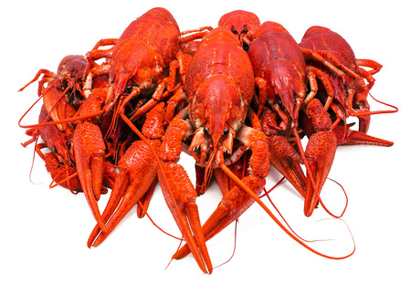 deepening: red boiled crawfish on a white background
