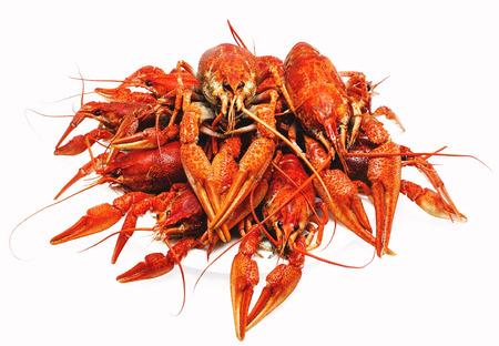 식욕을 돋 우는 빨간 삶은 가재는 흰색 배경에 스톡 콘텐츠