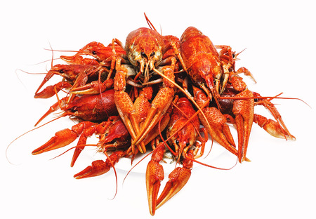 appetizing red boiled crawfish on a white background Foto de archivo