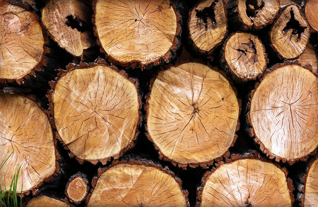 logging: logging log trees with knots closeup and grass Stock Photo