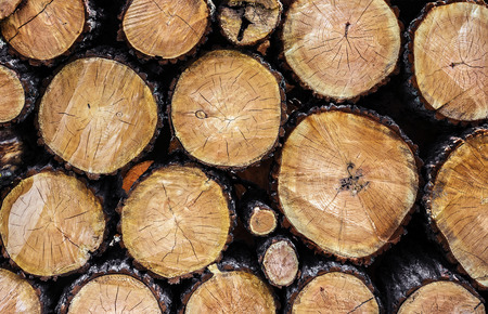 tree felling: tree felling trees slices closeup background Stock Photo