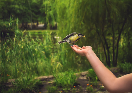 eats: wild bird in the palm summer eats on blurred background Stock Photo