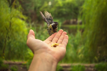 flew: wild bird in the palm of hand flew to eat