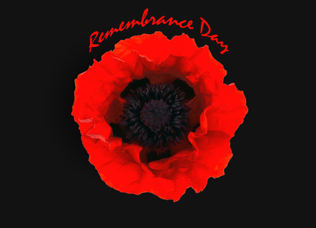 One red poppy isolated with text  Remembrance day Stock Photo