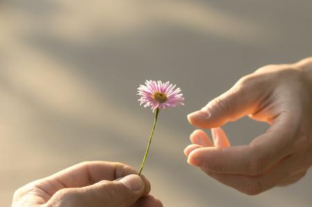 La mano regala un fiore selvaggio con amore. romanticismo, sentimenti Archivio Fotografico