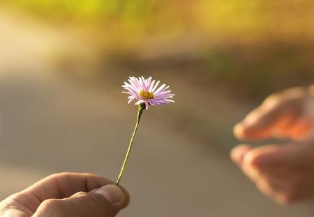 De hand geeft een wilde bloem met liefde. romance Stockfoto