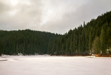 arbol de pino: Alpine lake, surrounded by fir trees, and pine trees