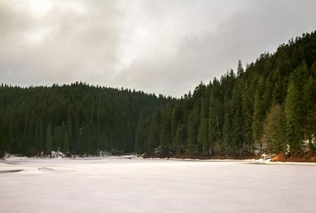arbol de pino: lago alpino, rodeado de abetos y pinos,
