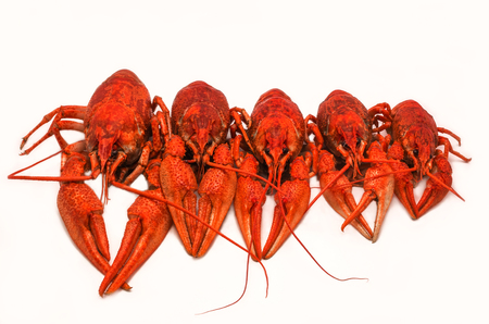 fluvial: juicy boiled crayfish isolated, lined up in size. unusual view.