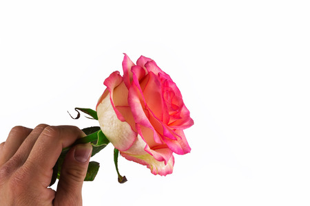 declaration: mans hand gives a gentle rose. declaration of love.