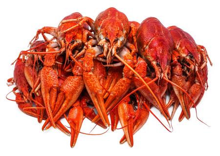 riverine: Fresh juicy boiled crawfish closeup. seafood, healthy food.